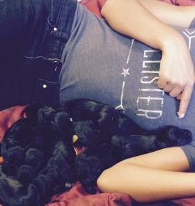 Rubys puppies 8.29.15 7